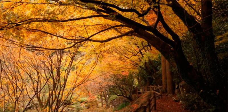 潜竜ヶ滝公園 紅葉