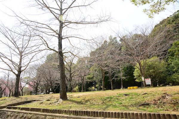 名切町の中央公園の花見スポット