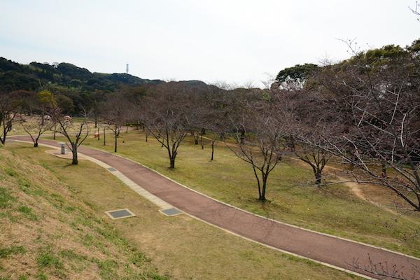 天神公園の花見スポット