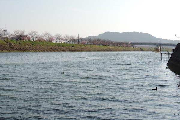 shirouo16