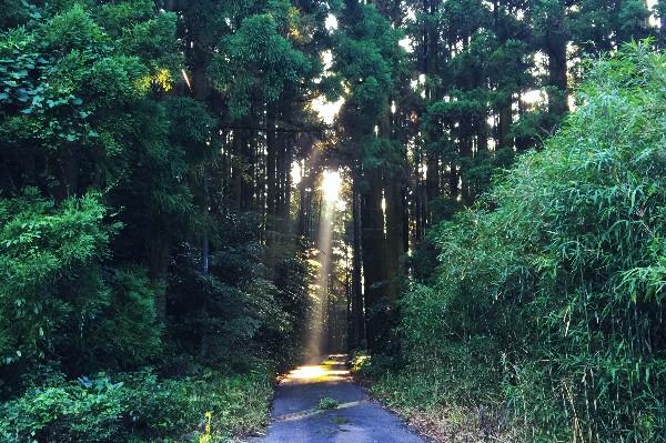 五蔵池に向かう途中の木々の木漏れ日