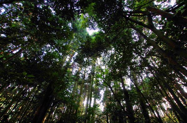 五蔵森林公園の森