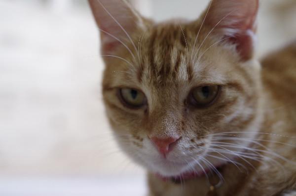 カフェ ニャンコプラス 猫の寝起き