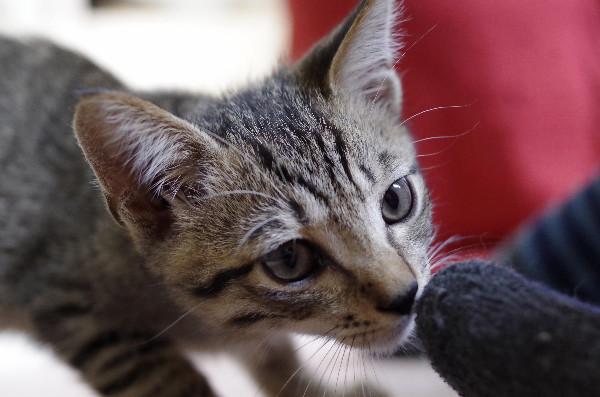 カフェ ニャンコプラス 子猫