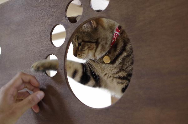 カフェ ニャンコプラス 猫 たび