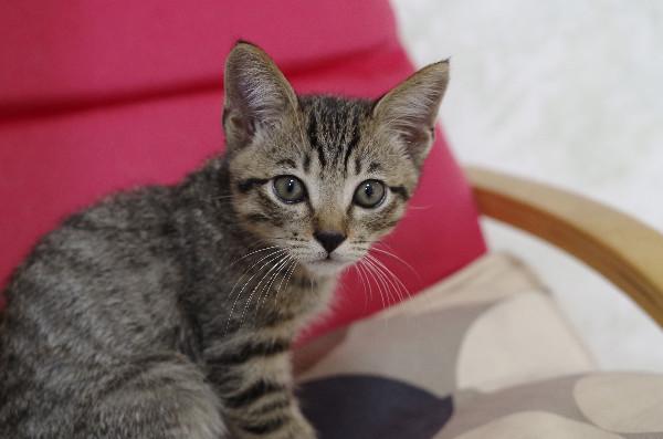 カフェ ニャンコプラス 猫36