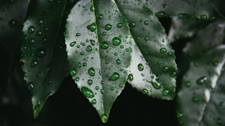 水滴がついた葉