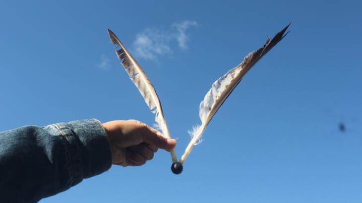 ミサゴの羽根