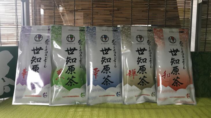 世知原茶03