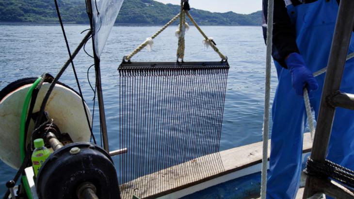 赤マテ貝漁