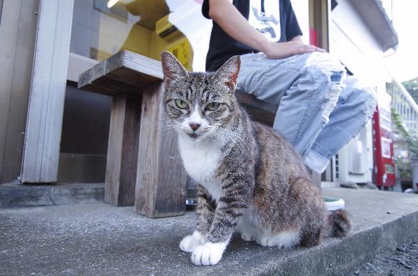 天天ラーメンの外にいる猫