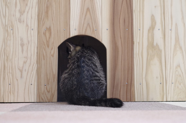 カフェ ニャンコプラス 猫の背中