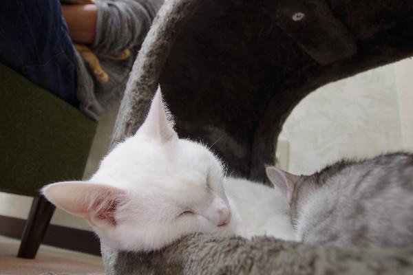 カフェ ニャンコプラス 猫 おもち