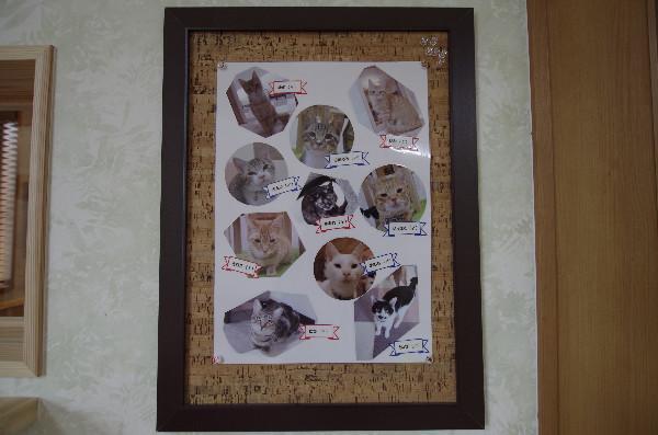 カフェ ニャンコプラス 猫