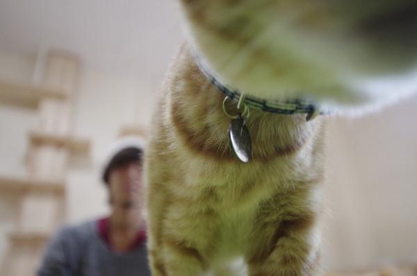 カフェ ニャンコプラス 猫 カメラと遊ぶ