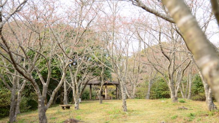 花の森公園の花見スポット