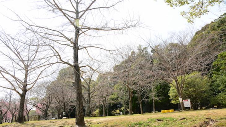 名切町の中央公園のお花見スポット