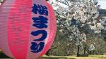 西海橋の桜まつり