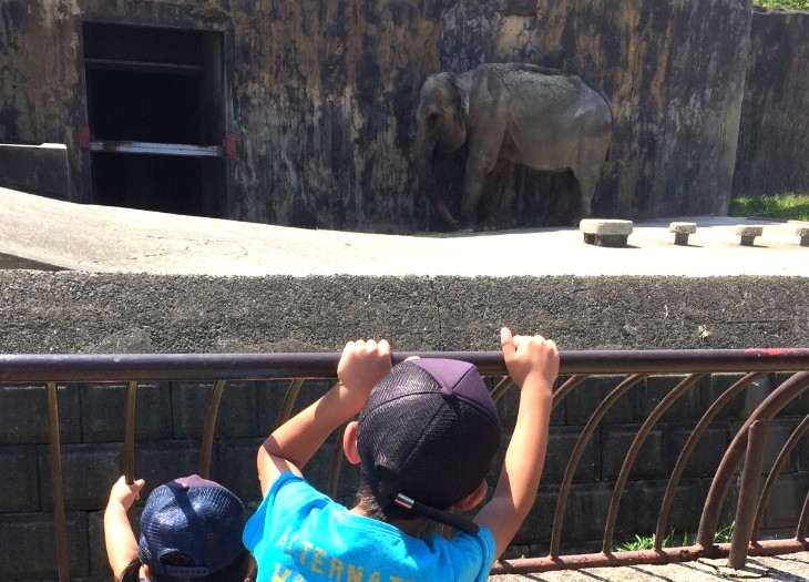 ゾウのハナコ