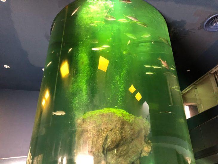 佐世保魚市場ビル内の水槽