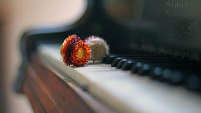 森ようびの音楽祭