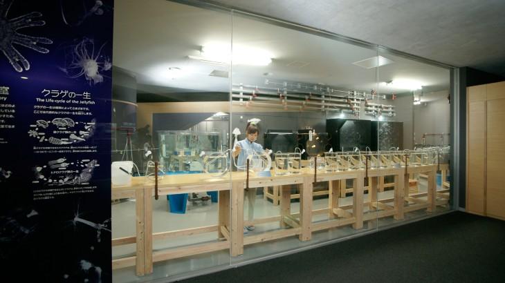 クラゲ教室