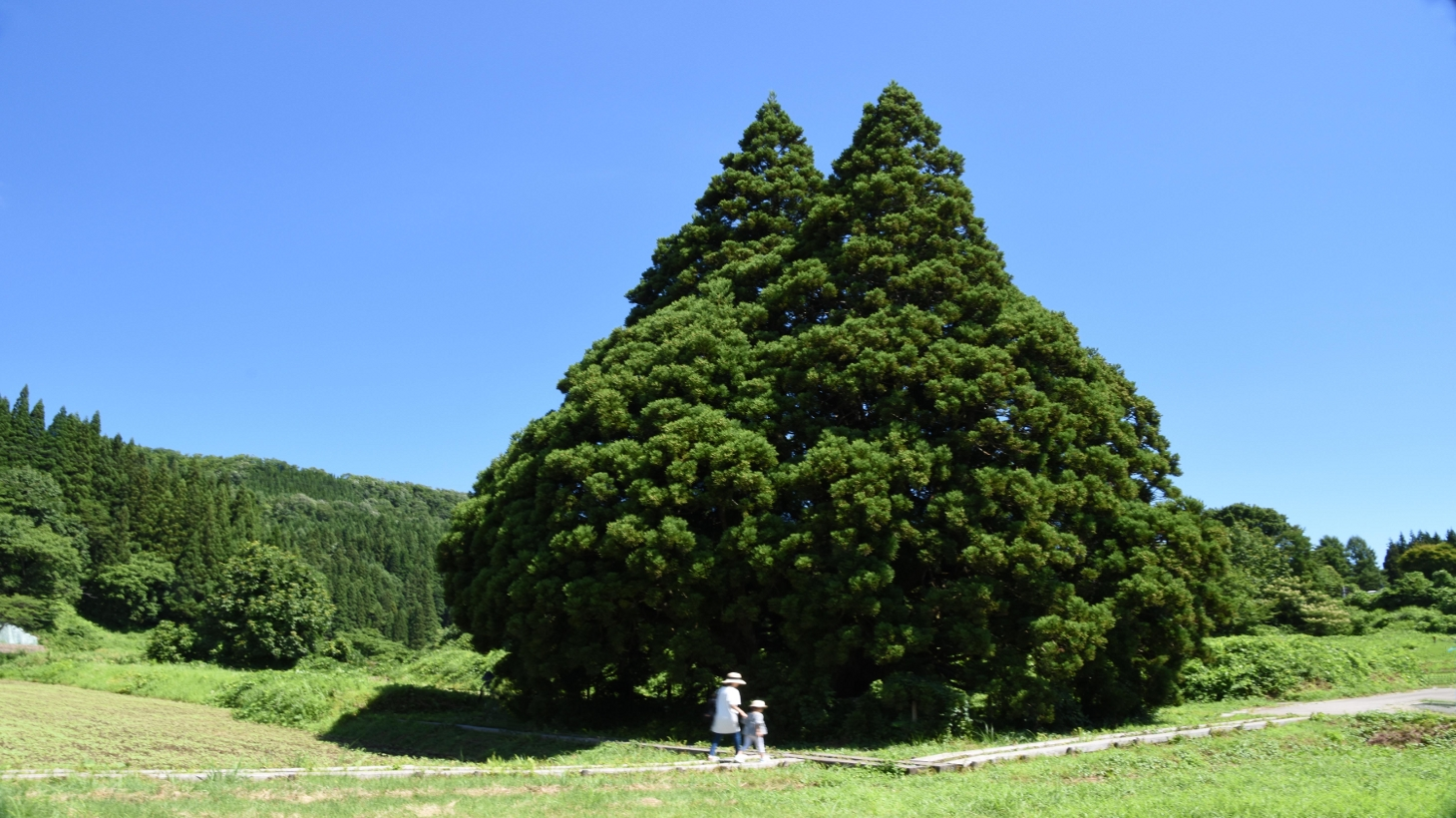 トトロの木とサツキとメイ