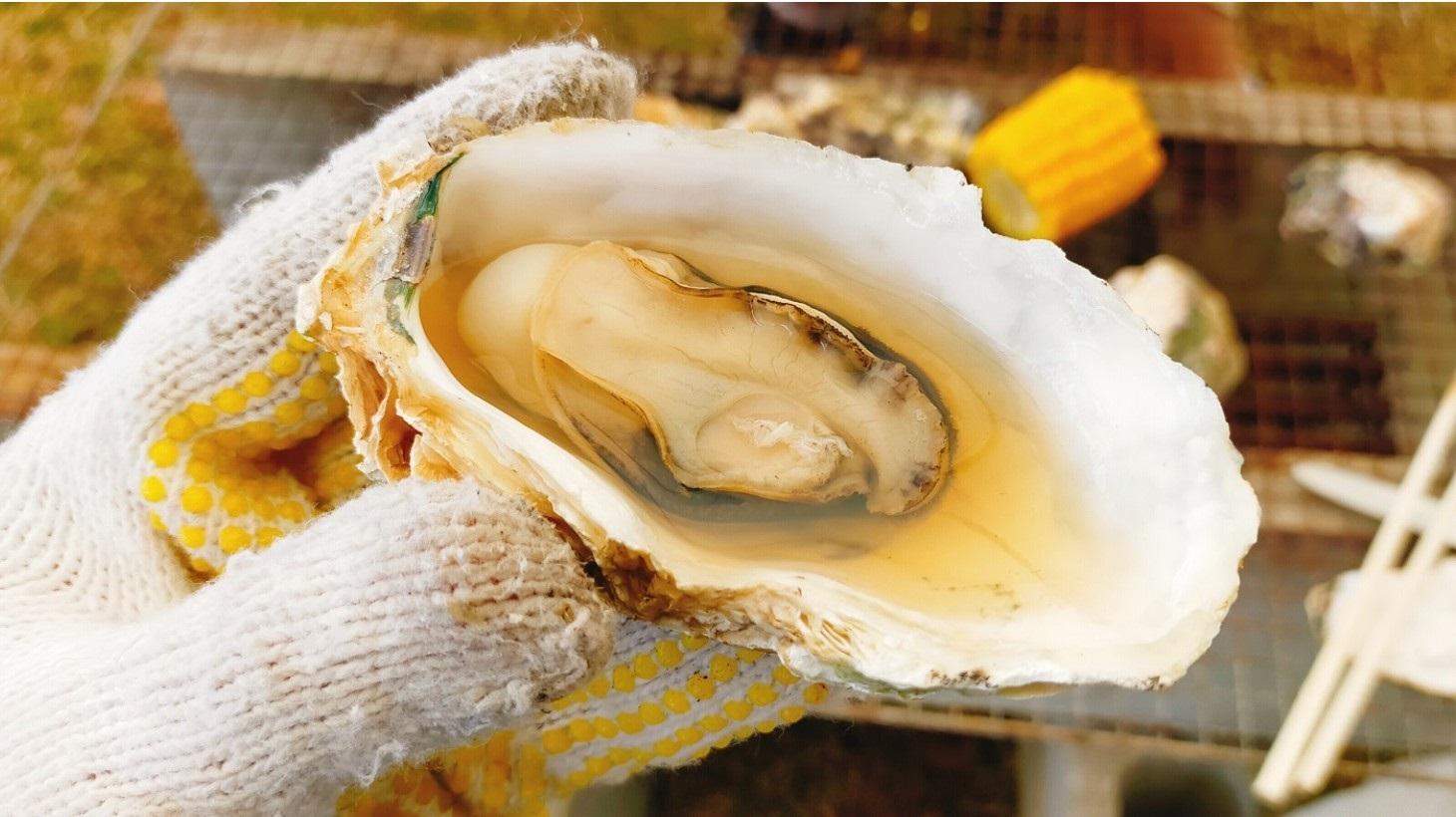 祭り 2020 牡蠣 【知内町】しりうち味な合戦冬の陣 カキVSニラまつり