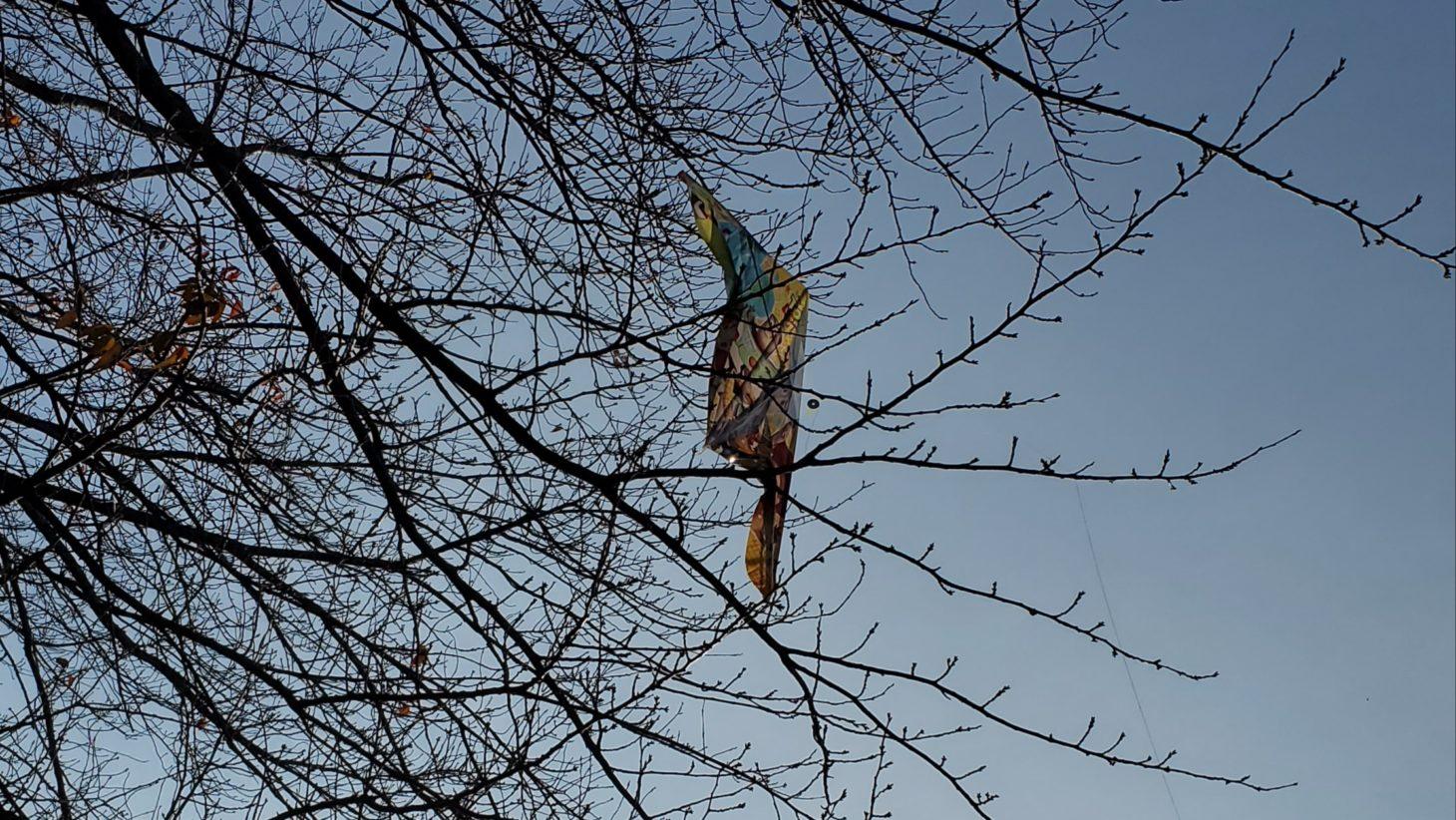 木につかまる