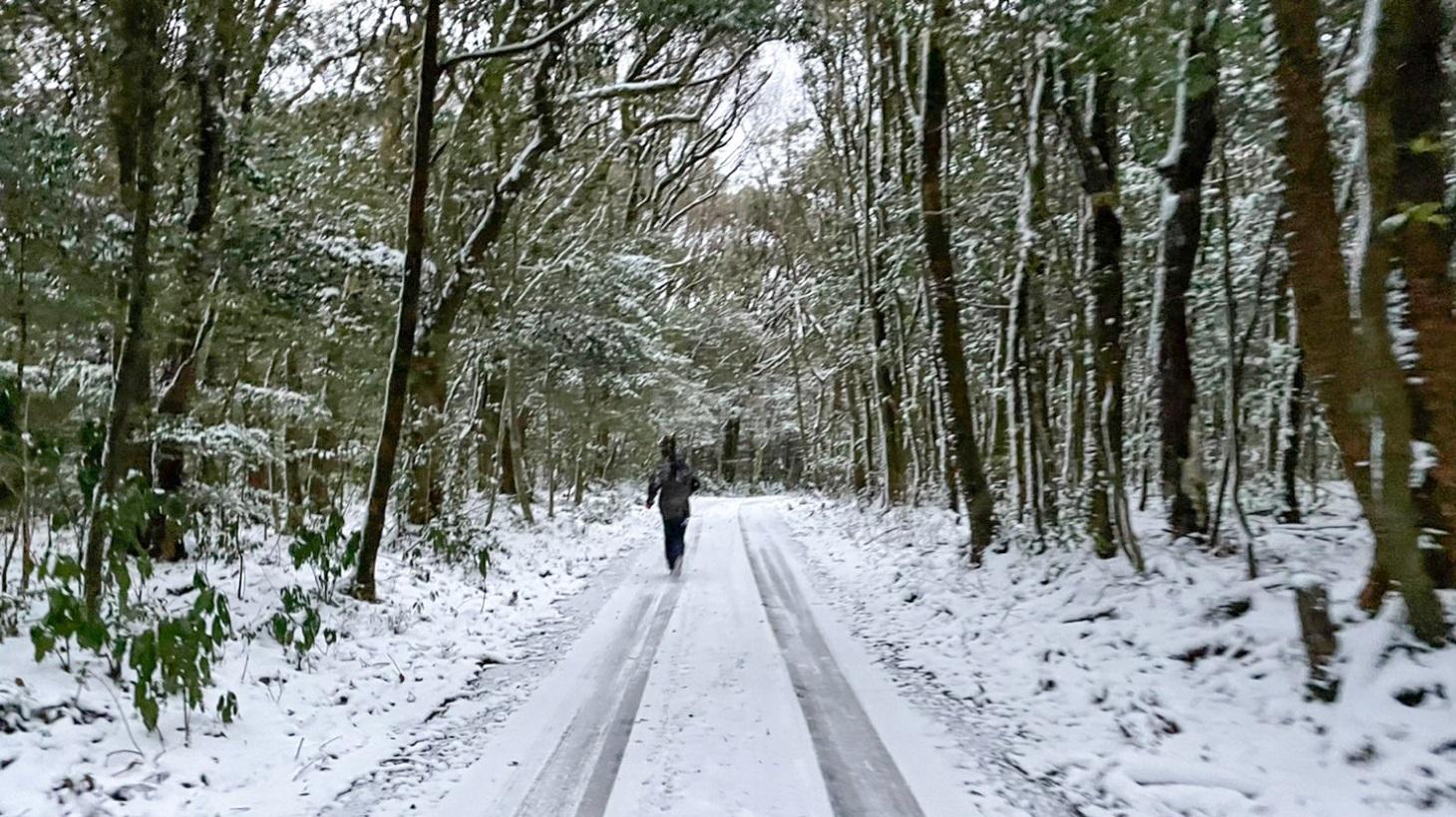 雪道を人が走っている